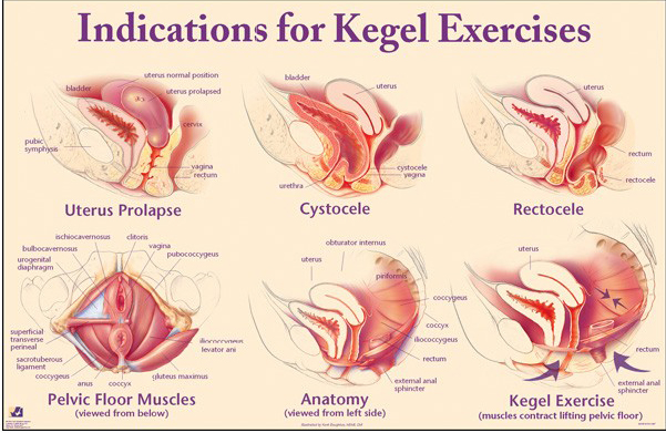 bebeficio del kegel,llvclub,blogs de parejas